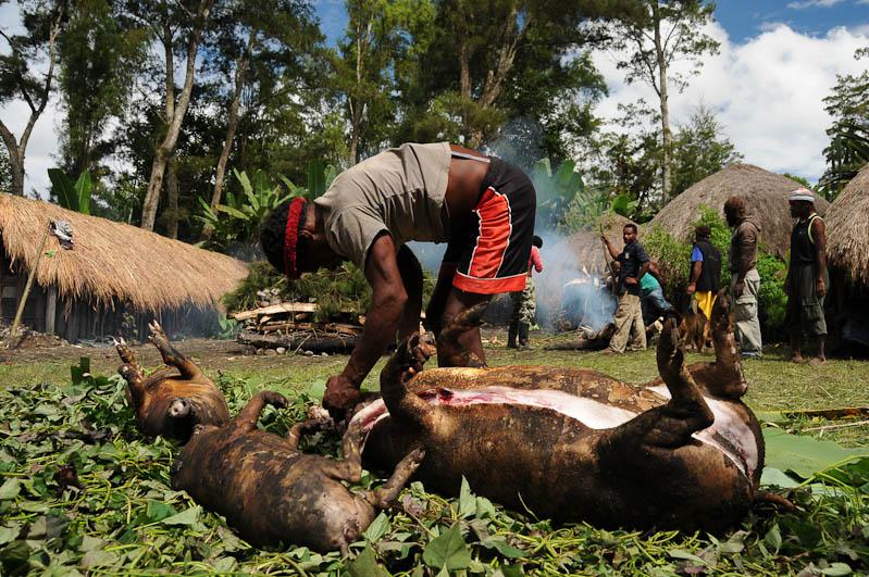 Indonesien, West-Papua, Baliem-Tal, valley, Wamena, Dani, tribe, Stammesdorf, Dorffest, Ostern, Schweine, Kochen, earth cooking, Reisebericht, www.wo-der-pfeffer-waechst.de