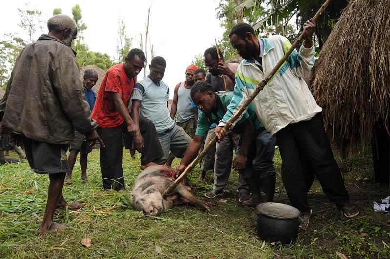 Indonesien, West-Papua, Baliem-Tal, valley, Wamena, Dani, tribe, Stammesdorf, Dorffest, Ostern, Wildschwein, www.wo-der-pfeffer-waechst.de