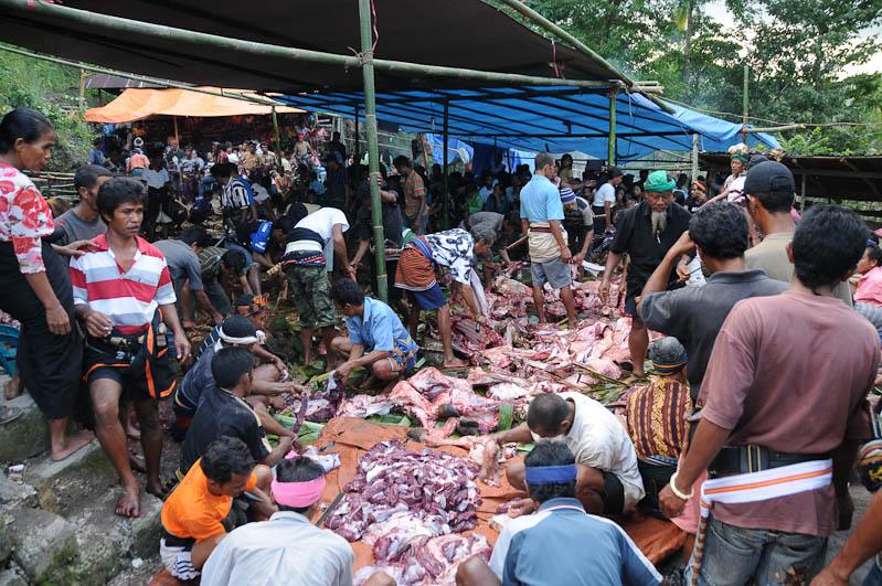 Sumba, Insel, Indonesien, Beerdigung, Totenfeier, Wasserbüffel, Marapu, Religion, www.wo-der-pfeffer-waechst.de