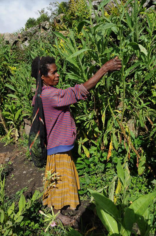 Indonesien, West-Papua, Wamena, Baliem-Tal, valley, Trekking, Frau, Noken, www.wo-der-pfeffer-waechst.de