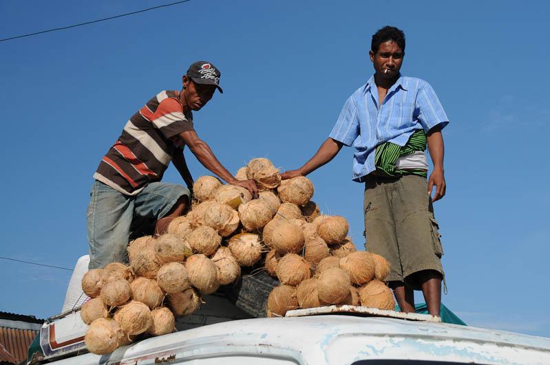 Indonesien, Sumba, Indonesia, Insel, Waikabubak, Kokosnuesse, Reisebericht, www.wo-der-pfeffer-waechst.de
