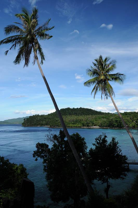 Palmen, Iboih Beach, Pulau Weh, Insel, Sabang, Sumatra, Banda Aceh, Indonesien, Indonesia, Reiseberichte, www.wo-der-pfeffer-waechst.de