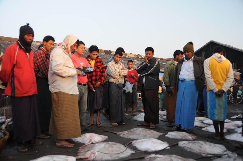 Sittwe, Rochen, Fischmarkt, Fischer, fish market, Akyab, Rakhine-Staat, State, Division, Myanmar, Burma, Birma, Reisebericht, www.wo-der-pfeffer-waechst.de