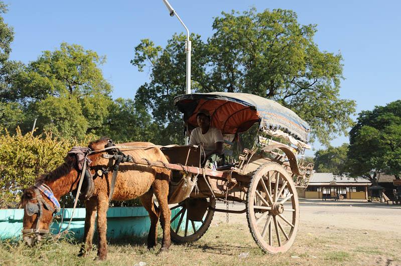 Monywa, Pferdekutsche, horse cart, Myanmar, Burma, Birma, Reisebericht, www.wo-der-pfeffer-waechst.de