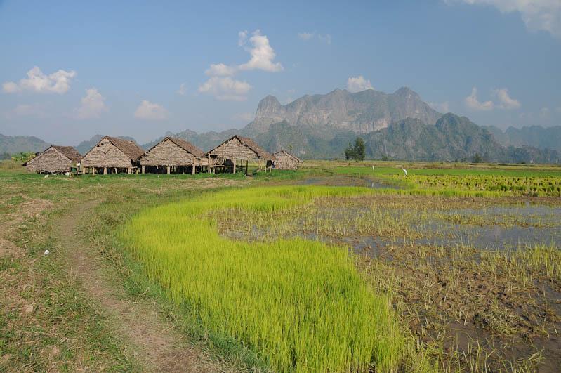 Hpa An, Karen, Kayin, Staat, State, Landschaft, Reisfelder, Myanmar, Burma, Birma, Reiseberichte, www.wo-der-pfeffer-waechst.de