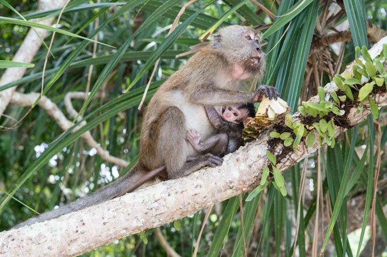 Koh Rawi, Koh Lipe,Ko Lipe, Thailand, Adang, Archipel, Tarutao, Snorkeling, Tour, Schnorcheln, Bootstrip, Ausflug, Affen, monkey, Reiseberichte, www.wo-der-pfeffer-waechst.de