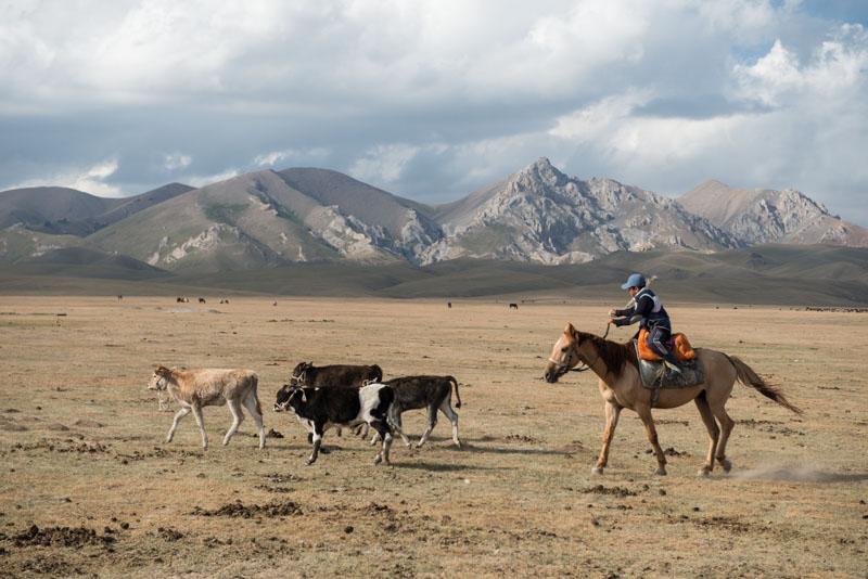 Kochkor, Song-Köl, See, Lake, Kirgisistan, Kirgistan, Kirgisien, kirgisische Nomaden, Pferde, reiten, Reiter, Hochebene, Trekking, Tour, Seidenstraße, Zentralasien, Reiseberichte, www.wo-der-pfeffer-waechst.de