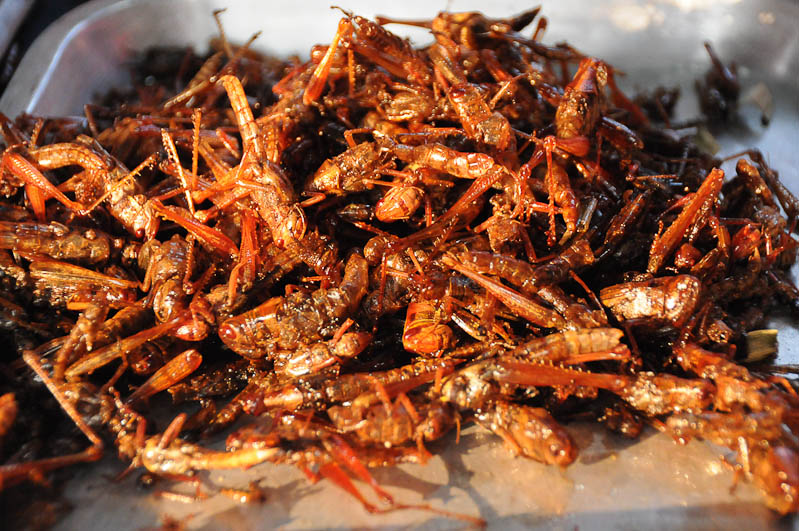 Ban Krut, Baan Krood, Golf von, Thailand, Markt, frittierte Insekten, Grashüpfer, Heuschrecken, Asien, Reiseberichte, Reiseblogger, www.wo-der-pfeffer-waechst.de