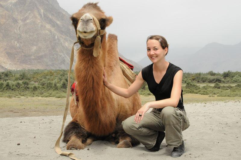 Baktrische Kamele, Nubra-Tal, Ladakh, Indien, indischer Himalaya, Himalaja-Gebirge, Hunder, Diskit, Reisetipps, Rundreisen, Asien, Reiseberichte, Reiseblogger, www.wo-der-pfeffer-waechst.de