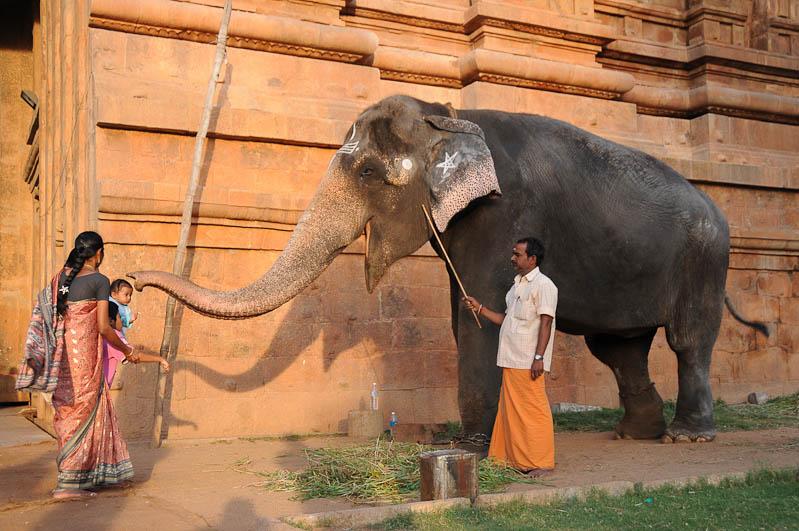 Thanjavur, Tanjore, Brihadishvara-Tempel, Tempelelefant, Tamil Nadu, Tempeltour, Südindien, Reisetipps, Rundreisen, Asien, Reiseberichte, Reiseblogger, www.wo-der-pfeffer-waechst.de