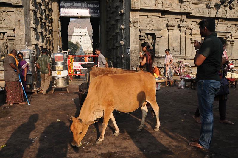 Tiruvannamalai, Arunachaleswar-Tempel, Osteingang, Tamil Nadu, Tempeltour, Südindien, Reisetipps, Rundreisen, Asien, Reiseberichte, Reiseblogger, www.wo-der-pfeffer-waechst.de