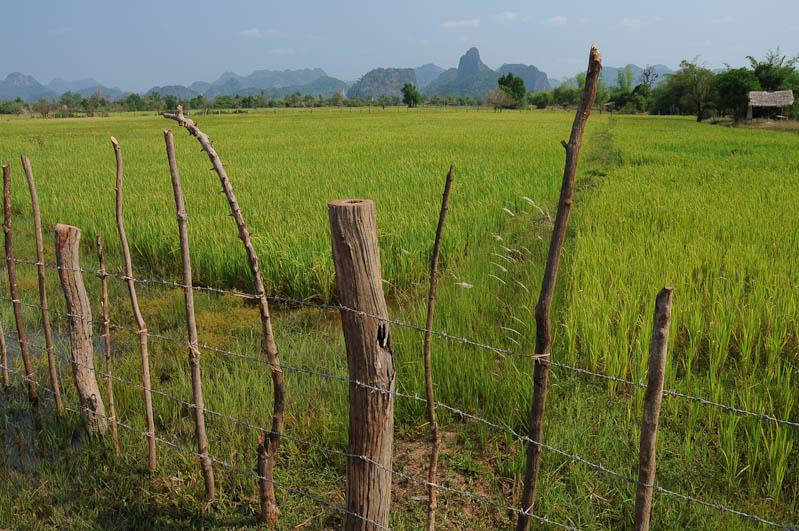 Laos, Zentrallaos, Thakhek, The Loop, Reisebericht, Karstberge, Reisfelder, Landschaft, scenery, rice fields, laotische Provinz Khammouan, Khammuan, Reisetipps, Rundreisen, Südostasien, Reiseblogger, www.wo-der-pfeffer-waechst.de