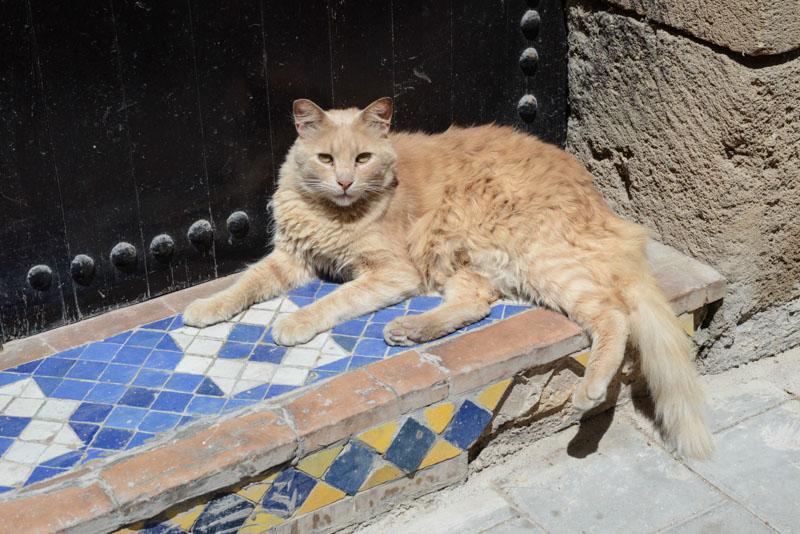 Essaouira, Marokko, Katzen, cats, Bilder, Infos, Reisebericht, Reisetipps, Afrika, Reiseblogger, www.wo-der-pfeffer-waechst.de