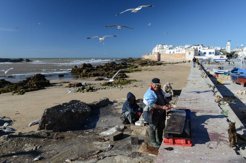Essaouira, Hafen, harbour, port, Marokko, Reisen, Bilder, Infos, Reisebericht, Reisetipps, Afrika, Reiseblogger, www.wo-der-pfeffer-waechst.de