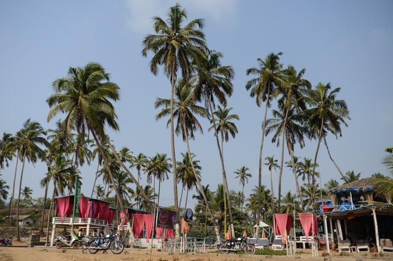 Palmen, Little Vagator Beach, Ozran Beach, Goa, Strände, Sonnenliegen, Indien, India, Reisen, Südasien, Bilder, Fotos, Reiseberichte, www.wo-der-pfeffer-waechst.de