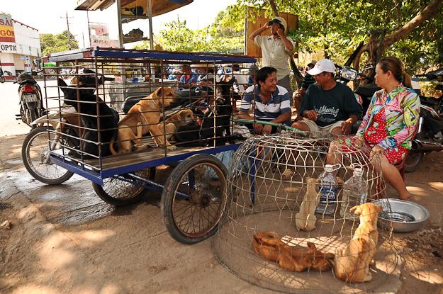 Vietnam, Phu Quoc, Insel, Hundemarkt, essen, www.wo-der-pfeffer-waechst.de
