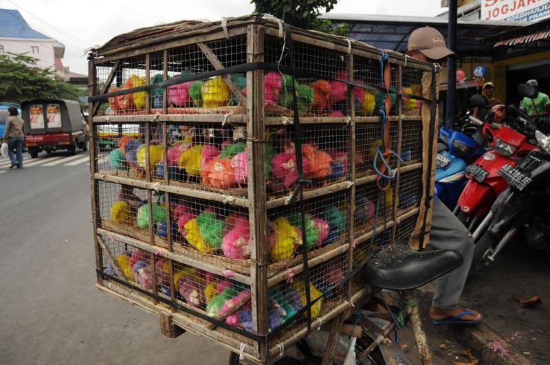 Yogyakarta, Java, bunte Küken, Indonesien, Reiseberichte, Foto: Heiko Meyer, www.wo-der-pfeffer-waechst.de