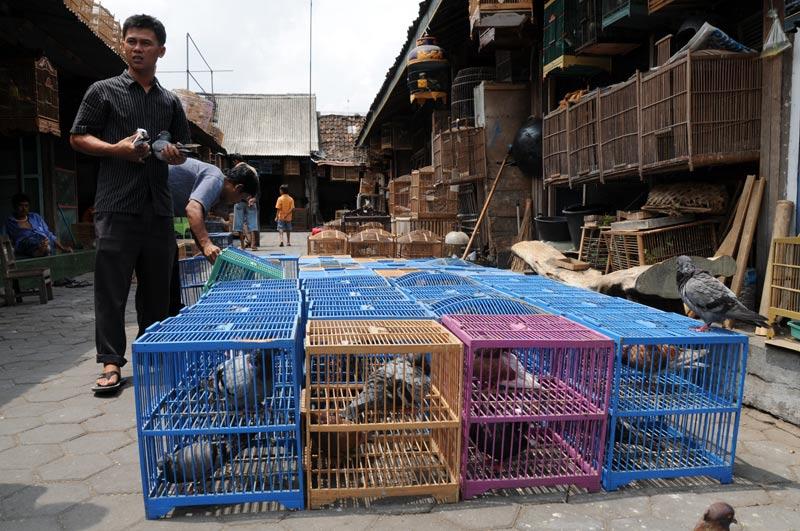 Yogyakarta, Java, Vogelmarkt, Brieftauben, Indonesien, Reiseberichte, Foto: Heiko Meyer, www.wo-der-pfeffer-waechst.de