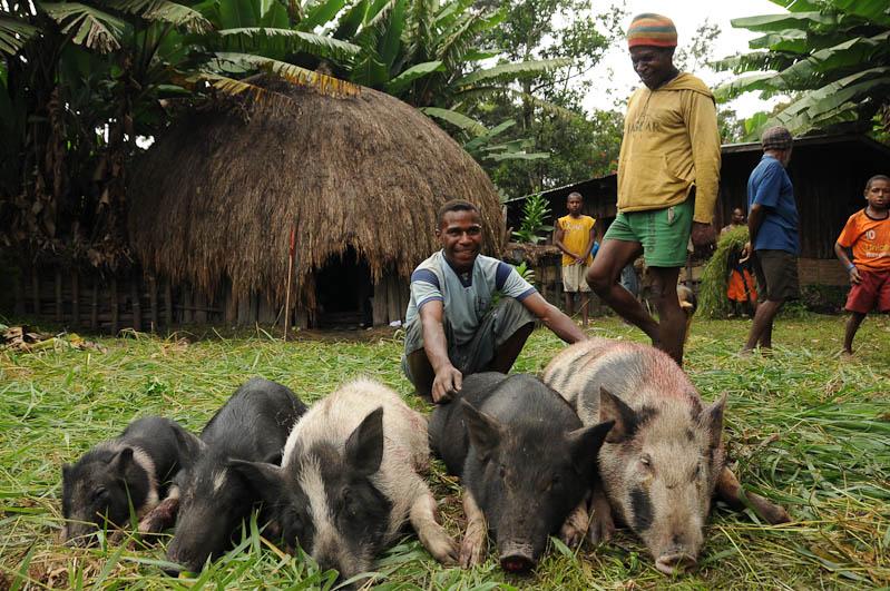 Indonesien, West-Papua, Baliem-Tal, valley, Wamena, Dani, tribe, Stammesdorf, Dorffest, Ostern, Wildschwein, Reisebericht, www.wo-der-pfeffer-waechst.de