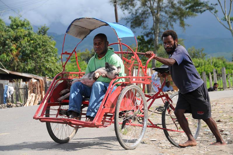 Indonesien, West-Papua, Baliem-Tal, valley, Wamena, Markt, Becak, Mann mit Schwein, Reisebericht, www.wo-der-pfeffer-waechst.de