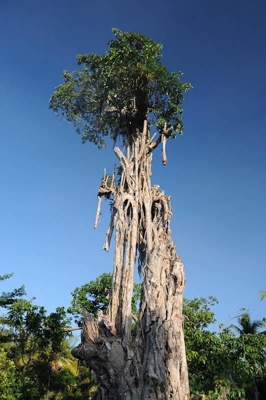 Sumba, Insel, Indonesien, Baum, Reisebericht, www.wo-der-pfeffer-waechst.de