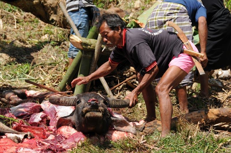 Büffel, Begräbniszeremonie, Tana Toraja, Sulawesi, Island, Insel, Indonesien, Indonesia, Totenkult, Reiseberichte, Foto: Heiko Meyer, www.wo-der-pfeffer-waechst.de
