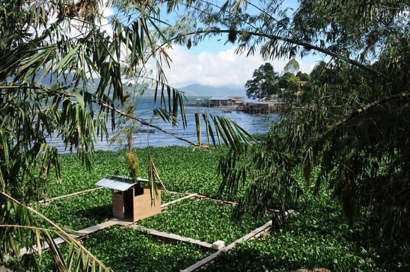 Danau Tondano, See, Wasserspinat, Minahasa-Hochland, Nord-Sulawesi, Insel, Indonesien, Indonesia, Reiseberichte, Foto: Heiko Meyer, www.wo-der-pfeffer-waechst.de