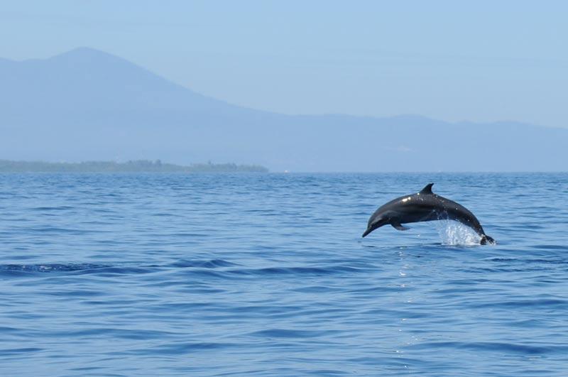 Delfin-Beobachtung, Pulau Siladen, Island, Insel, Bootstour, dolphin watching, Nord-Sulawesi, Indonesien, Indonesia, Reiseberichte, Foto: Heiko Meyer, www.wo-der-pfeffer-waechst.de