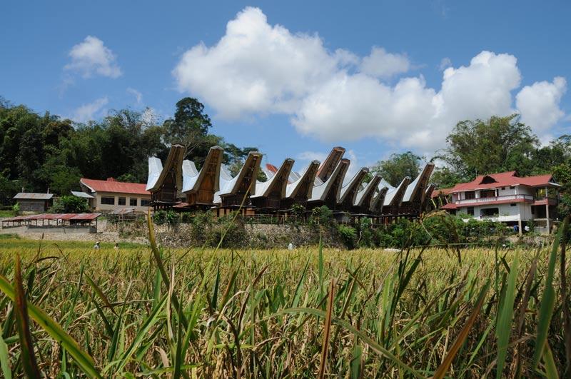 Reisfeld, Dorf, Tana Toraja, Land, Sulawesi, Island, Insel, Indonesien, Indonesia, Reiseberichte, Foto: Heiko Meyer, www.wo-der-pfeffer-waechst.de