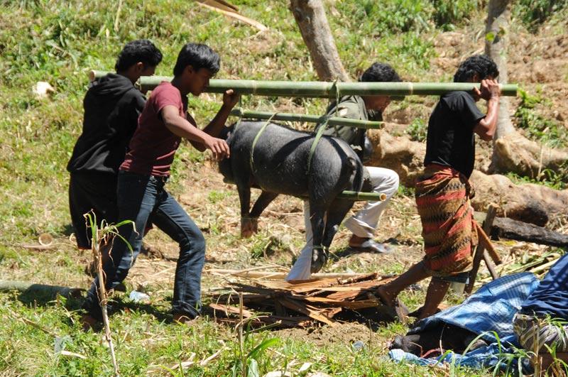 Schwein, Begräbniszeremonie, Tana Toraja, Sulawesi, Island, Insel, Indonesien, Indonesia, Totenkult, Reiseberichte, Foto: Heiko Meyer, www.wo-der-pfeffer-waechst.de