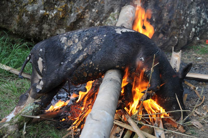 Schwein, Grill, Feuer, Tana Toraja, Land, Sulawesi, Island, Insel, Indonesien, Indonesia, Reiseberichte, Foto: Heiko Meyer, www.wo-der-pfeffer-waechst.de
