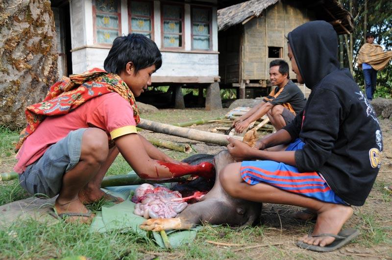 Schwein schlachten, Dorf, Tana Toraja, Land, Sulawesi, Island, Insel, Indonesien, Indonesia, Reiseberichte, Foto: Heiko Meyer, www.wo-der-pfeffer-waechst.de