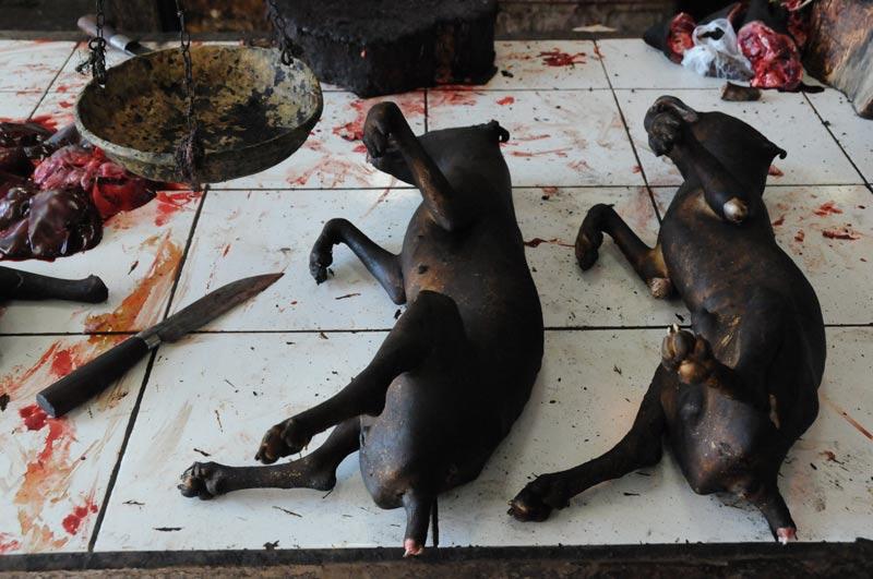 Tomohon, Markt, Hunde, Minahasa-Hochland, Nord-Sulawesi, Insel, Indonesien, Indonesia, Reiseberichte, Foto: Heiko Meyer, www.wo-der-pfeffer-waechst.de