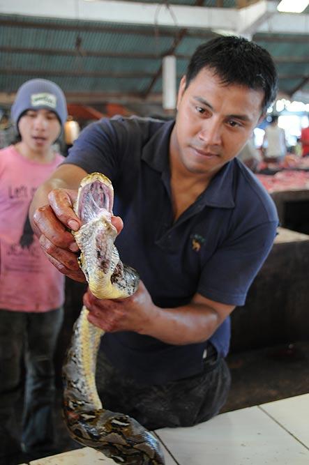 Tomohon, Markt, market, Minahasa-Hochland, Schlangen, snakes, Mann, Indonesien, Indonesia, Nord-Sulawesi, Reiseberichte, Foto: Heiko Meyer, www.wo-der-pfeffer-waechst.de