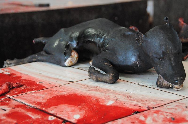Tomohon, Markt, market, Minahasa-Hochland, toter Hund, dead dog, Indonesien, Indonesia, Nord-Sulawesi, Reiseberichte, Foto: Heiko Meyer, www.wo-der-pfeffer-waechst.de