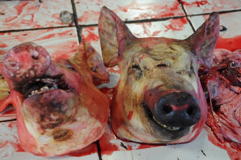 Tomohon, Markt, market, Minahasa-Hochland, totes Schwein, Fleischer, dead pig, Indonesien, Indonesia, Nord-Sulawesi, Reiseberichte, Foto: Heiko Meyer, www.wo-der-pfeffer-waechst.de