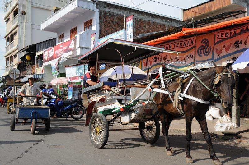 Tondano, Pferdekutsche, Minahasa-Hochland, Nord-Sulawesi, Insel, Indonesien, Indonesia, Reiseberichte, Foto: Heiko Meyer, www.wo-der-pfeffer-waechst.de