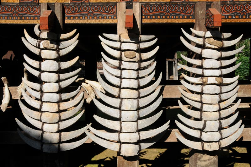 Tongkonan, Tana Toraja, Sulawesi, Island, Insel, Indonesien, Indonesia, traditionelle Häuser, Büffelhörner, Reiseberichte, Foto: Heiko Meyer, www.wo-der-pfeffer-waechst.de