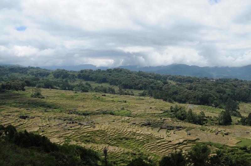 Trekking, Reisterrassen, Tana Toraja, Land, Sulawesi, Island, Insel, Indonesien, Indonesia, Reiseberichte, Foto: Heiko Meyer, www.wo-der-pfeffer-waechst.de
