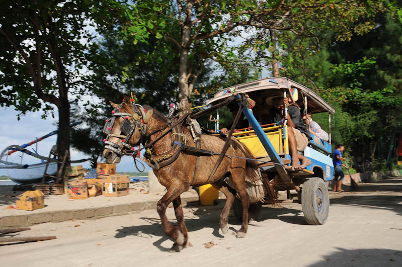 Lombok, Gili Trawangan, Cidomo, Pferdekutsche, Indonesien, Indonesia, Insel, Reiseberichte, www.wo-der-pfeffer-waechst.de