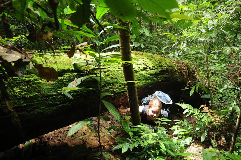 Bukit Lawang, Gunung-Leuser-Nationalpark, Nord-Sumatra, Trekking, Urwald, Dschungel, Indonesien, Indonesia, Reisebericht, www.wo-der-pfeffer-waechst.de