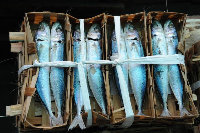 Yogyakarta, Java, Markt, market, Pasar Beringharjo, Fisch, 50 Bilder, die sofort Lust auf eine Indonesien-Reise machen, Indonesia, Reiseberichte, Foto: Heiko Meyer, www.wo-der-pfeffer-waechst.de