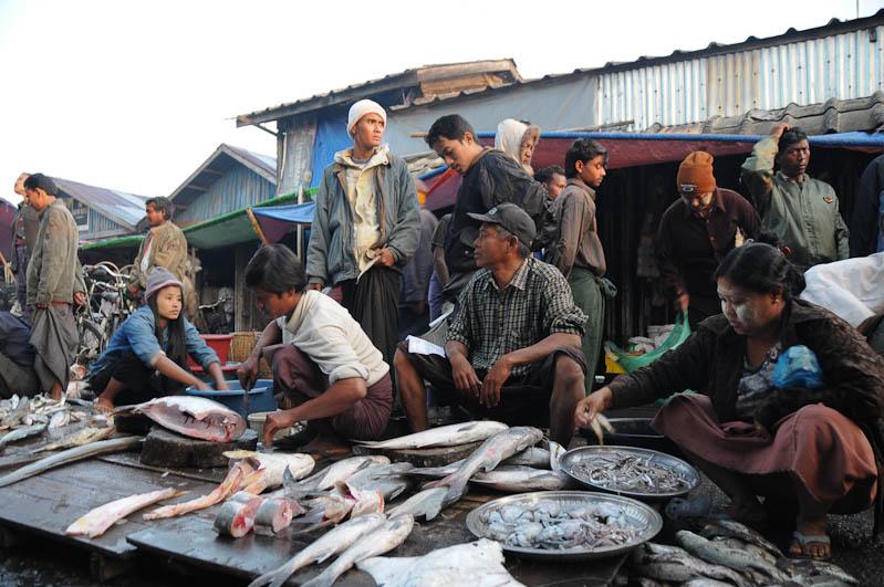 Sittwe, Fischmarkt, Fischer, fish market, Akyab, Rakhine-Staat, State, Division, Myanmar, Burma, Birma, Reisebericht, www.wo-der-pfeffer-waechst.de