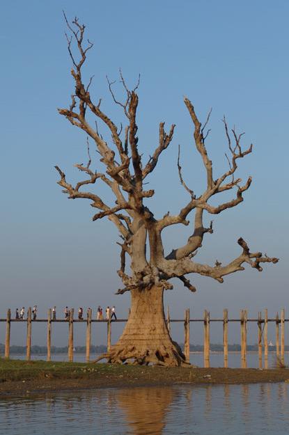 Amarapura, U Bein-Teakholzbrücke, bridge, Baum, Mandalay, Myanmar, Burma, Birma, Reisebericht, www.wo-der-pfeffer-waechst.de