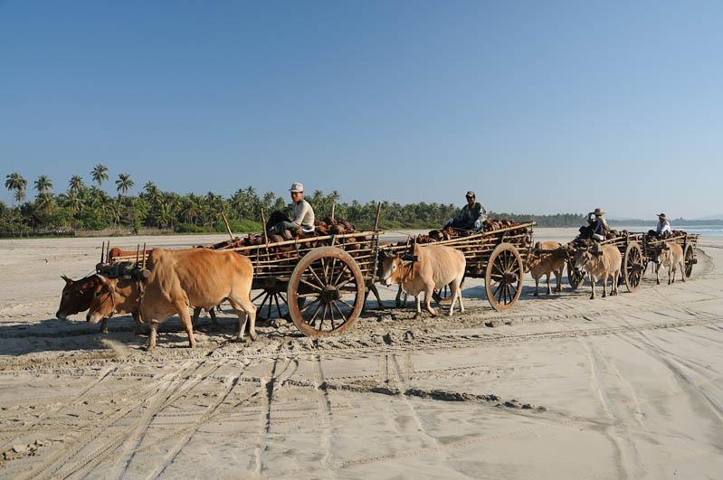 Ngwe Saung Beach, Strand, Ochsenkarren, oxcarts, Myanmar, Burma, Birma, Golf von Bengalen, Reisebericht, www.wo-der-pfeffer-waechst.de