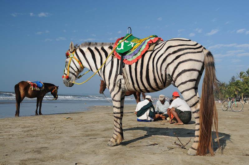 Chaung Tha Beach, Strand, Zebra, Pferd, Myanmar, Burma, Birma, Golf von Bengalen, Reisebericht, www.wo-der-pfeffer-waechst.de