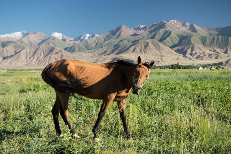 Kochkor, Kirgisistan, Kirgistan, Kirgisien, Trekking, Pferde, Seidenstraße, Zentralasien, Reiseberichte, www.wo-der-pfeffer-waechst.de