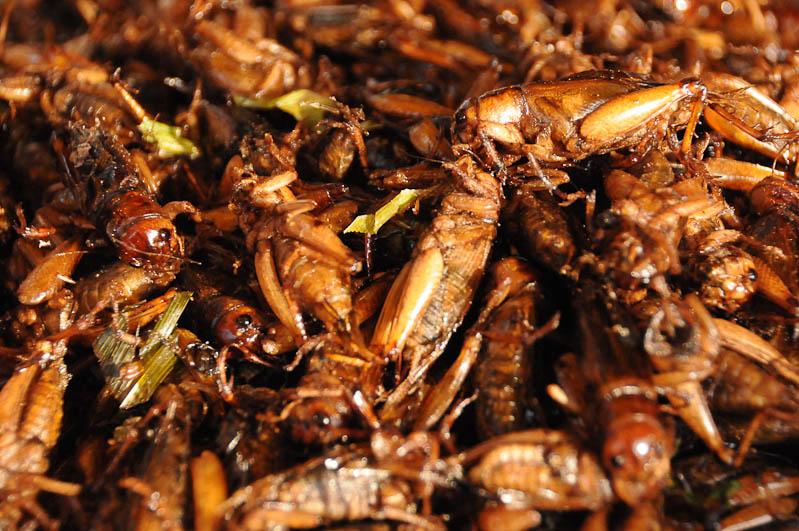 Prachuap Khiri Khan, Nachtmarkt, frittierte Insekten, Grashüpfer, Golf von, Thailand, Geheimtipps, Reisen mit Kindern, Babys, Kleinkindern, Elternzeit, Asien, Reiseberichte, Reiseblogger, www.wo-der-pfeffer-waechst.de