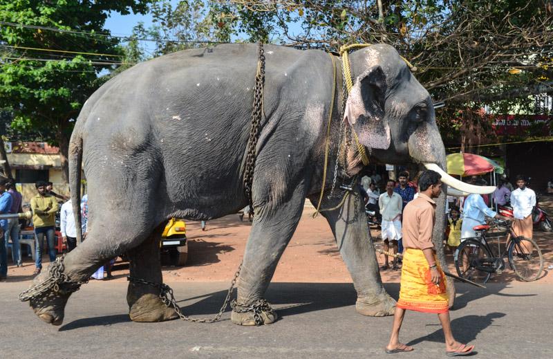 Elefant, Varkala, Kerala, Südindien, Bahnhof, Reisetipps, Reisen mit Kindern, Rundreisen, Asien, Reiseberichte, Reiseblogger, www.wo-der-pfeffer-waechst.de