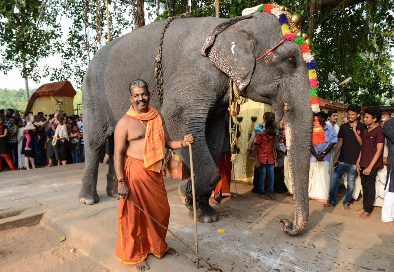 Elefanten, Varkala, Janardhana-Swami-Tempel, Tempelfestival, Kerala, Südindien, Reisetipps, Reisen mit Kindern, Rundreisen, Asien, Reiseberichte, Reiseblogger, www.wo-der-pfeffer-waechst.de